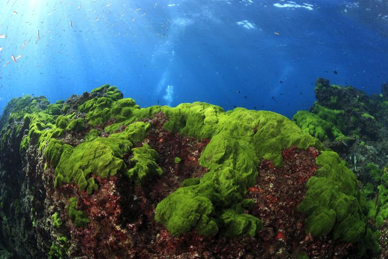 sea algae, ocean algae, algae