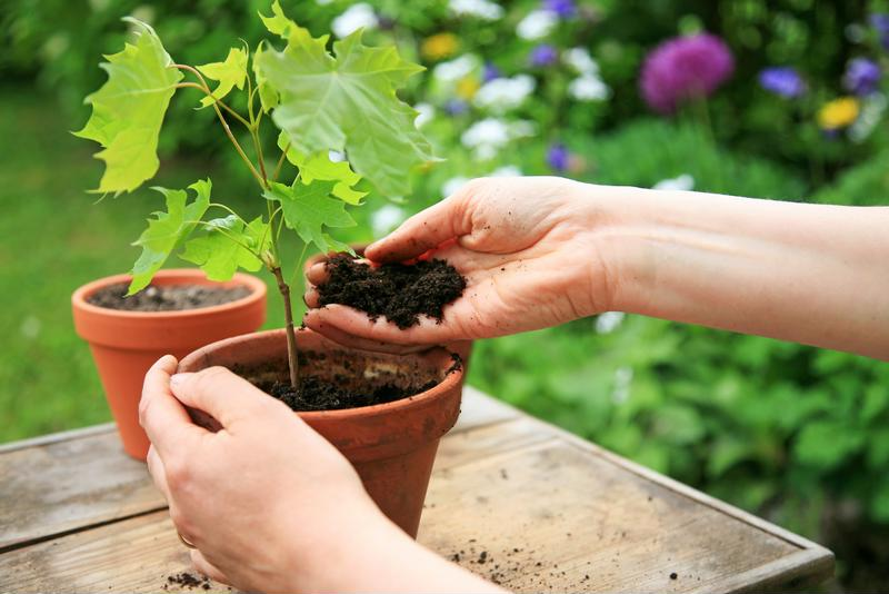 Choosing the right plants for your garden is important if you have allergies.