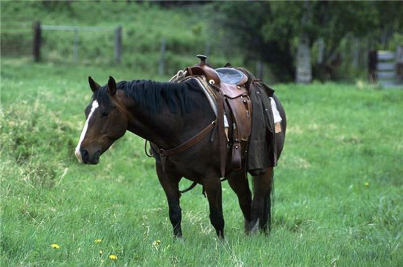 An improperly fitted saddle can hurt both the horse and the rider.