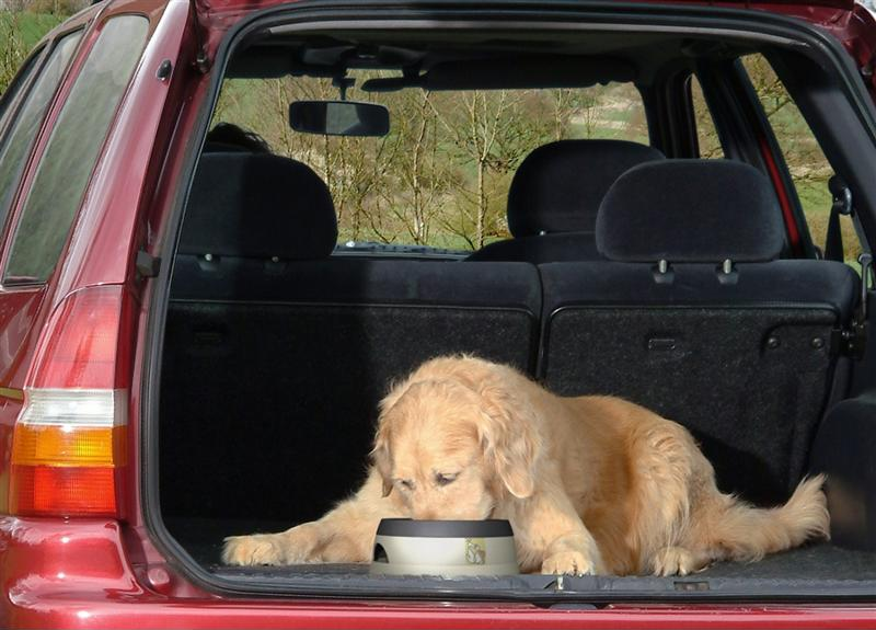 An SUV is great for traveling with large dogs.