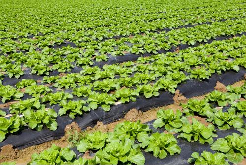 Agriculture and the IIoT are compatible.