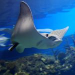 Experience the underwater worlds of Indonesia - Indonesia Travel News
