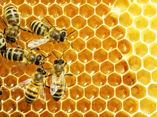 How agricultural experts are using IoT to save bee colonies