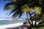 A report on the best restaurants in the Caribbean - Food & Wine Travel News