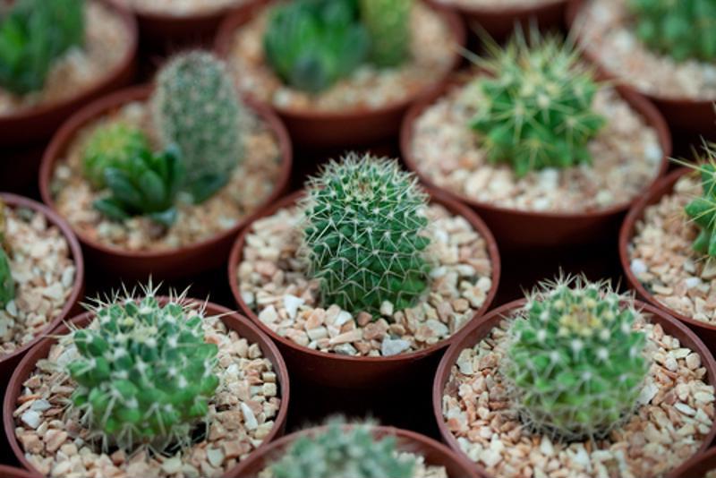 cacti, succulents, greenery, yard