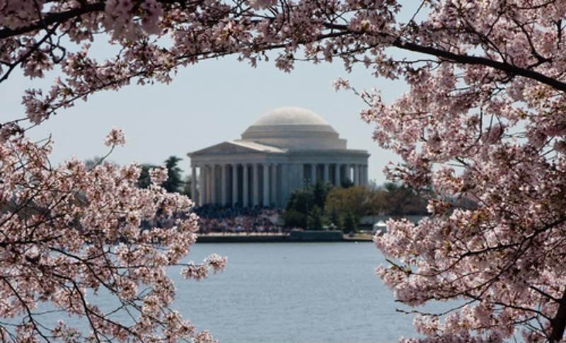 Washington, D.C. is a great spring break travel spot, especially during the Cherry Blossom Festival.