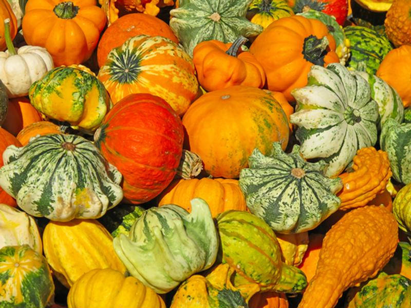 A collection of colorful gourds and pumpkins.
