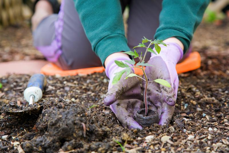 Plant a few of your favorite veggies to save some money this summer.