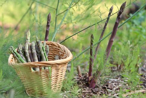 Turn your fresh asparagus into delicious seasonal dishes.