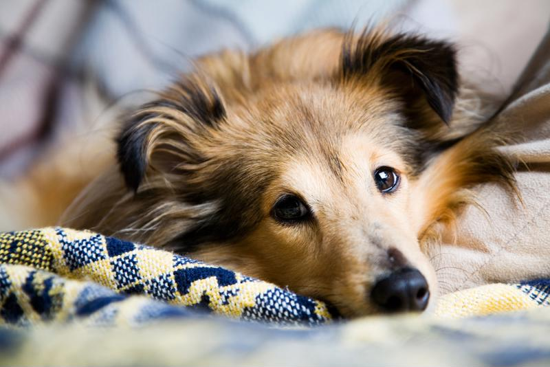 Pet dander is a common indoor allergen.