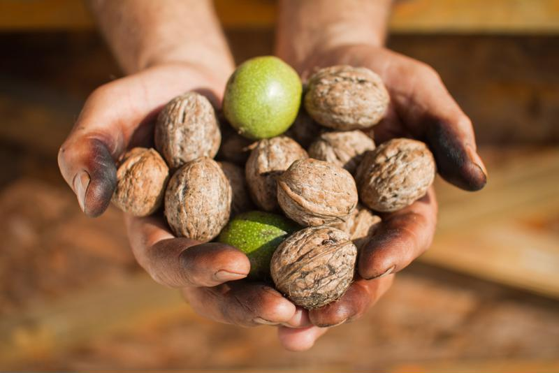 Crack fresh walnuts to create our favorite walnut candy.