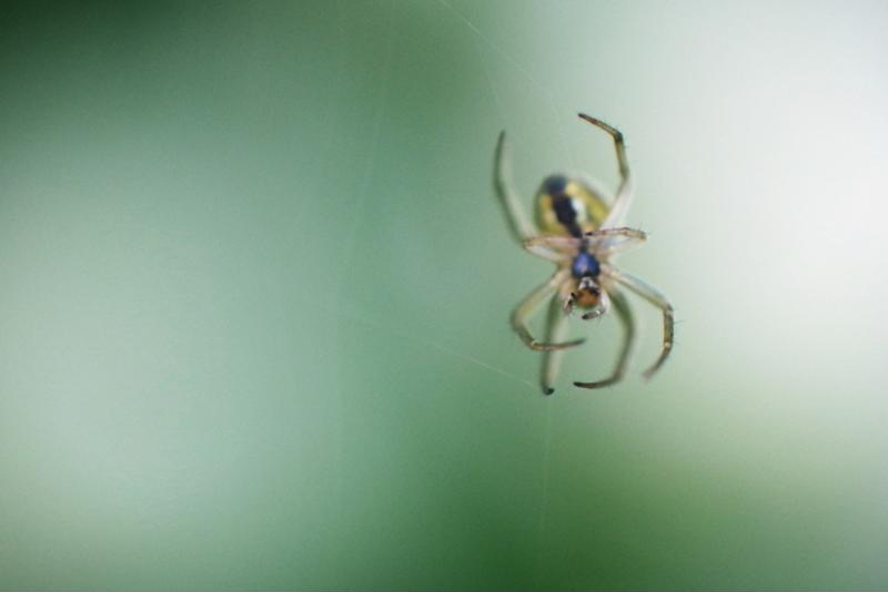 Spiders are a common pest found in commercial buildings.