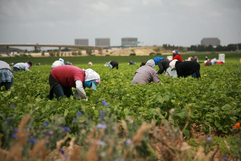 Farm workers routinely suffer health problems as they age, making this employment increasingly undesirable - especially to an educated population.