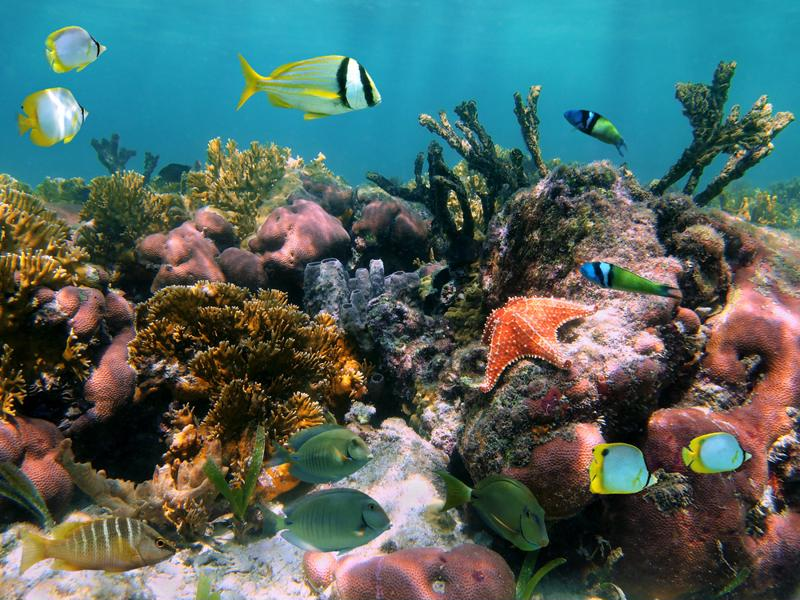 Cremated remains can help support and ocean habitat.