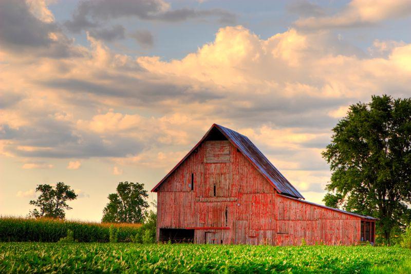 High winds did massive damage to Iowa crops.
