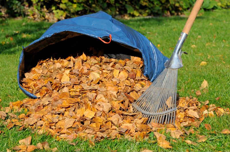 Pile of leaves being raked into bag.
