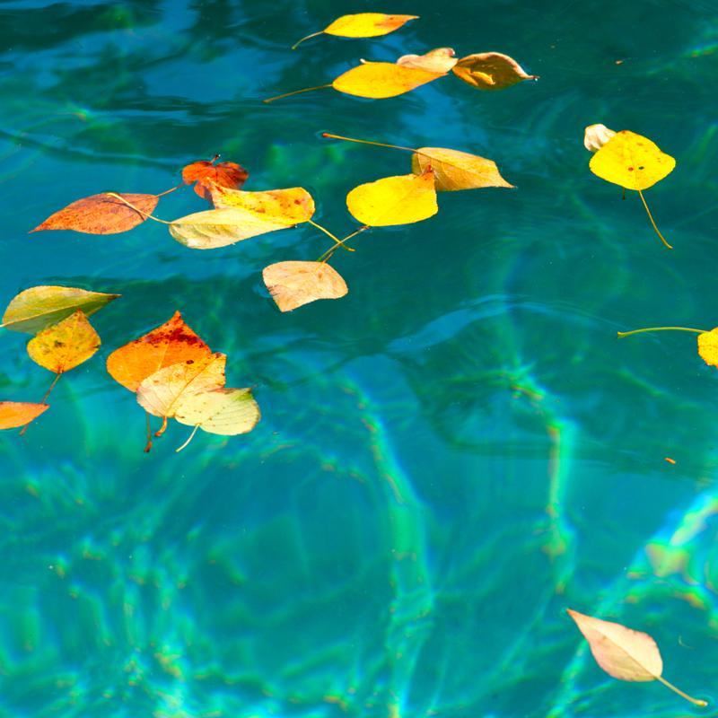 Leaves in your pool can be a big problem.