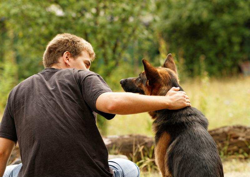 Service animals can provide numerous benefits to veterans.