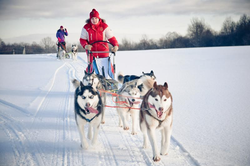 Introduce yourself to the Alaskan wilderness with a dog sledding excursion.