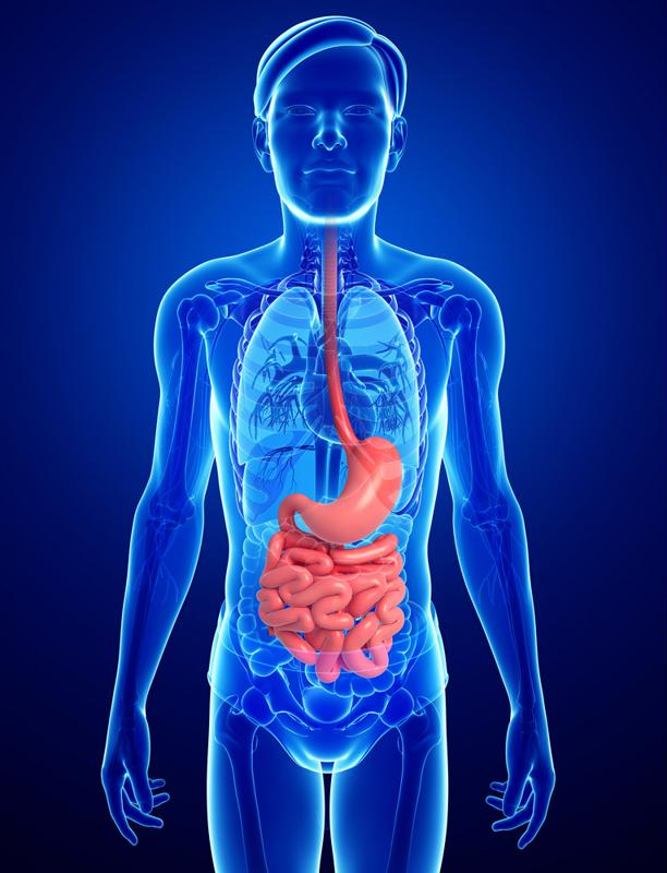 Supplementing your plant-based diet with a probiotic can help improve digestive health.
