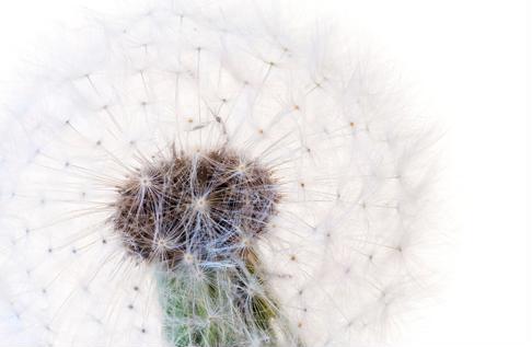 Allergy season: Helping your loved ones prepare