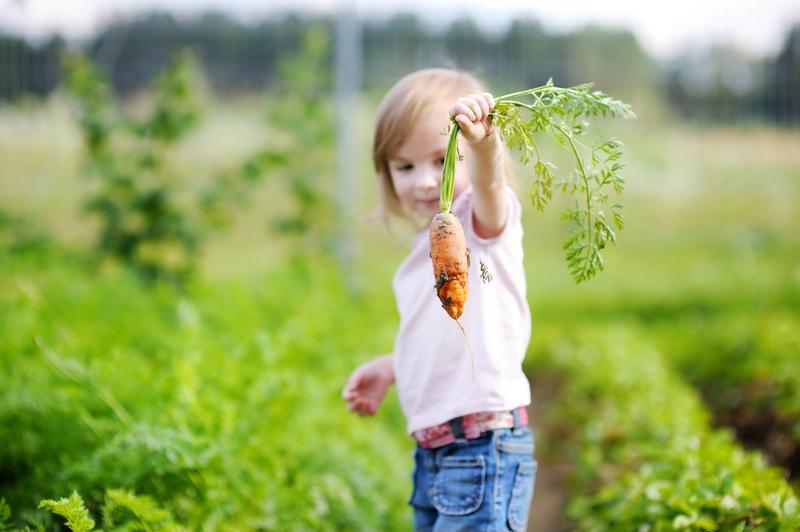 Girl holding carrot in community garden.