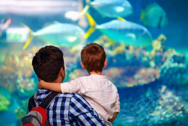 Invite your family to visit the aquarium during your stay in Charleston.