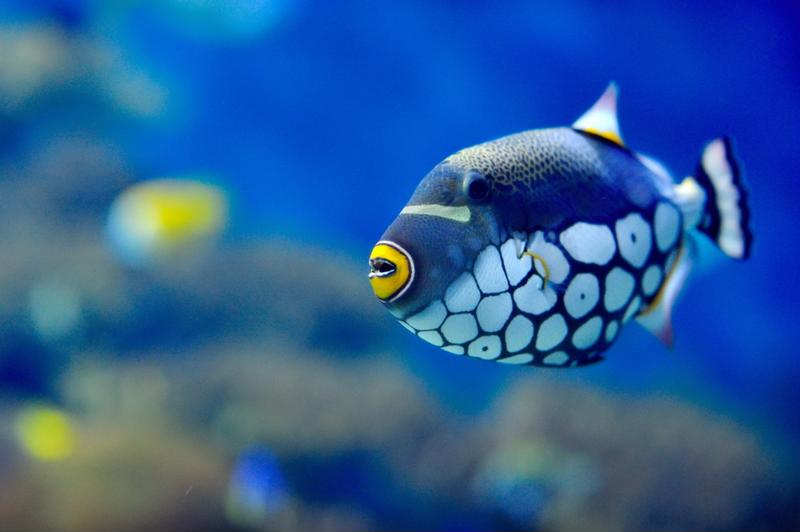 Tropical fish are some of the most beautiful and interesting fish around.