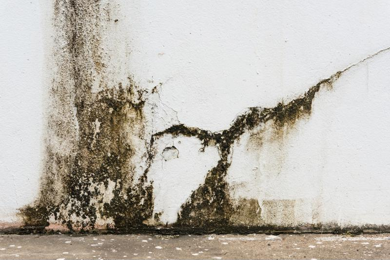 Mold can be a problem in home settings as well.