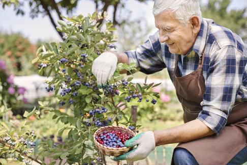 Regularly tending to a garden can help older adults connect with nature to reduce stress.