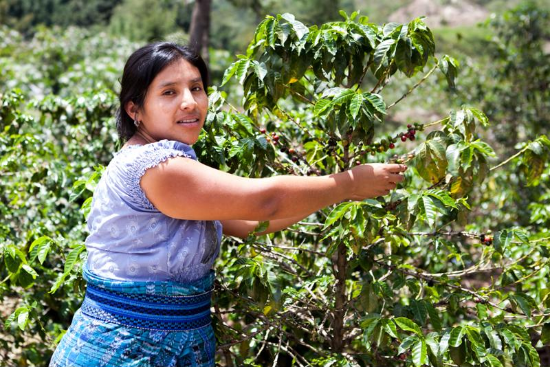 Single origin coffees are typically derived from the same geographical region.