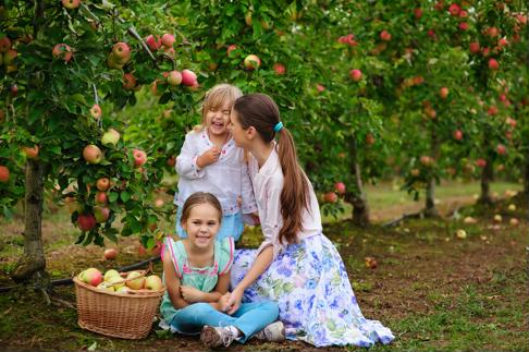 Take the family apple picking to retrieve the Pink Lady apples for the Apple Blossom Tart.