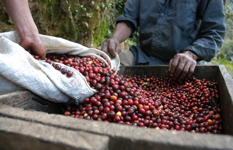 coffee beans, coffee cherries, coffee roasters, roasteries, Mr. Coffee