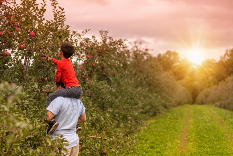 Apple picking is a fun way to spend time with your family.