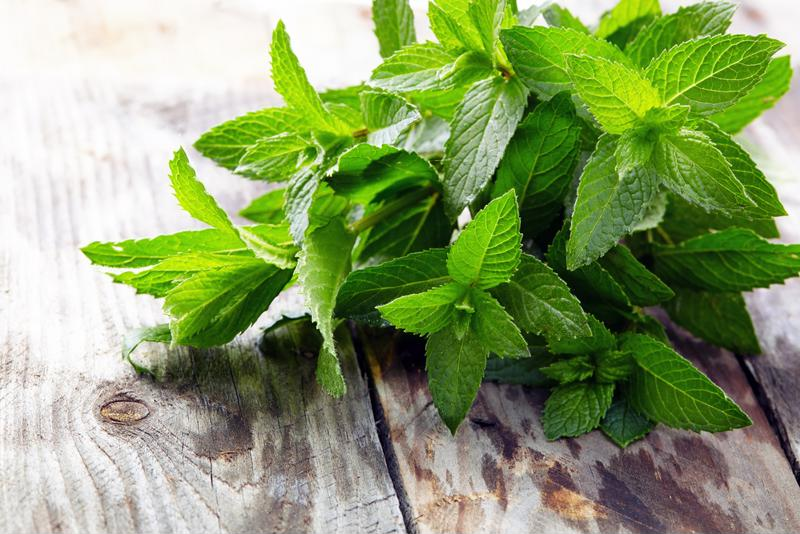 Fresh mint makes an excellent addition to any frozen concoction.
