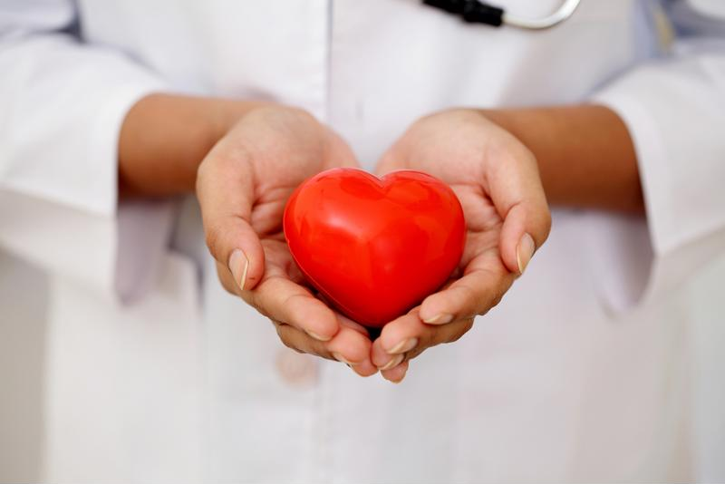 Doctor holding toy heart in hands.