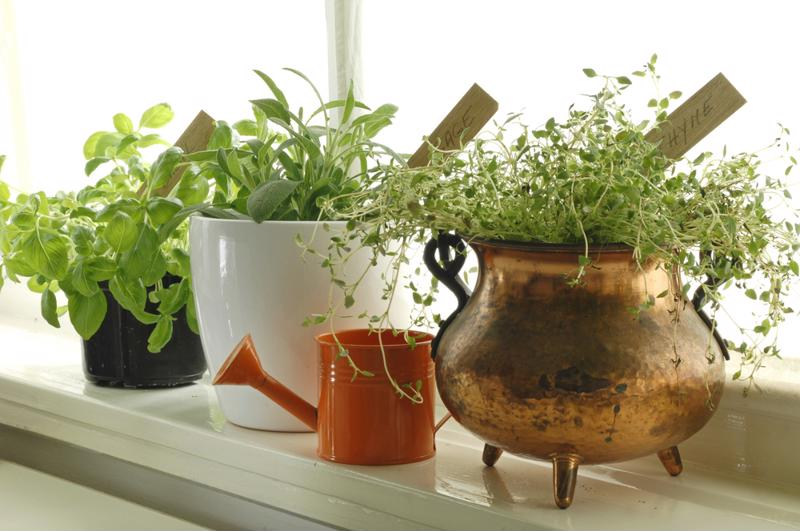 Herbs add to the look of your home, as well as the taste of your dishes.