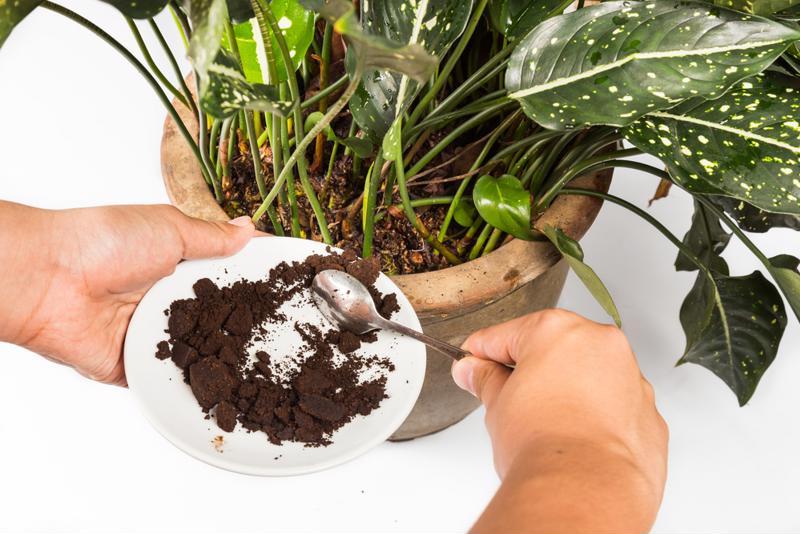 Coffee makes great fertilizer.