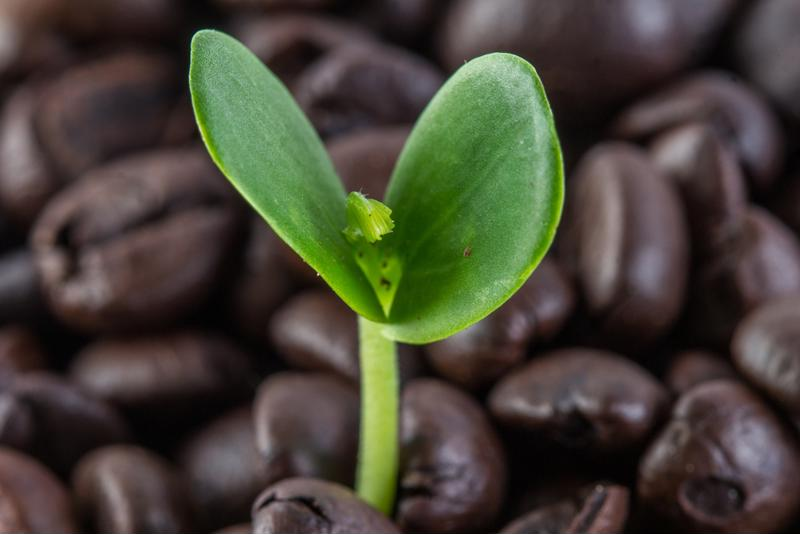 Starbucks is using the $1 billion to assist coffee farmers and improve the company's overall sustainability.