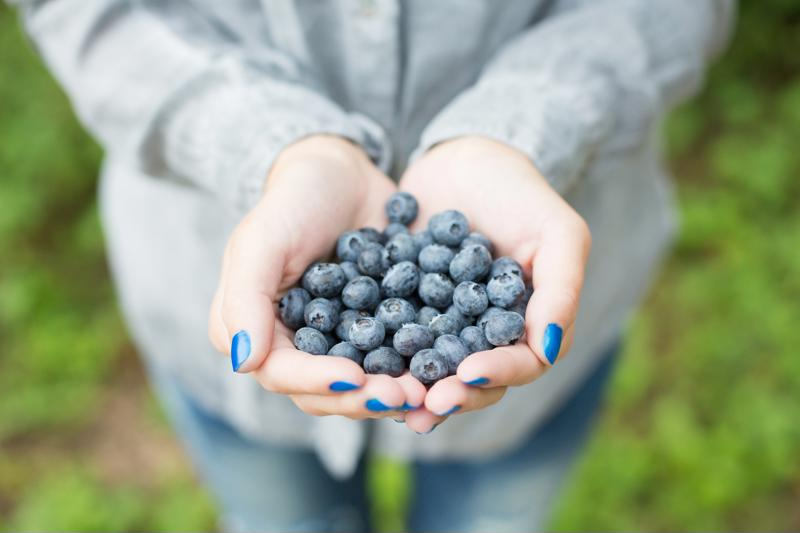Whether you pick them yourself or purchase them in a store, fresh blueberries are the perfect summer food to stock up on.
