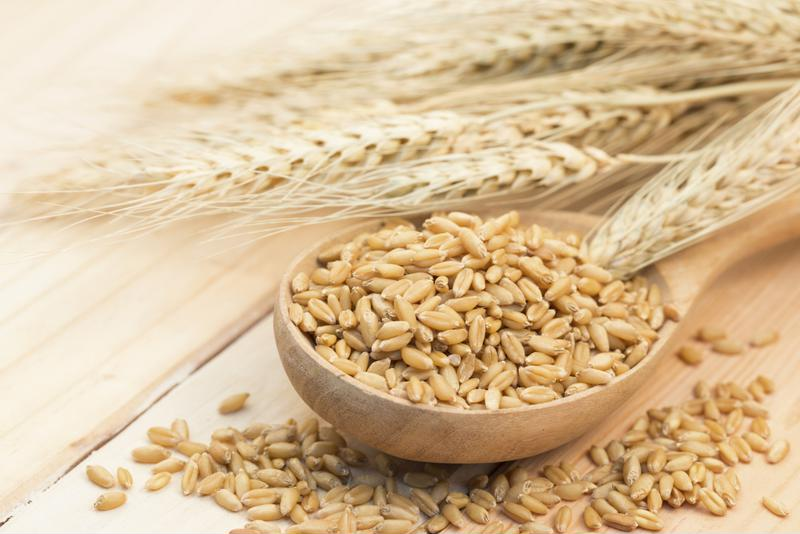 Barley is essential to beer production, and notoriously sensitive to heat and water levels.