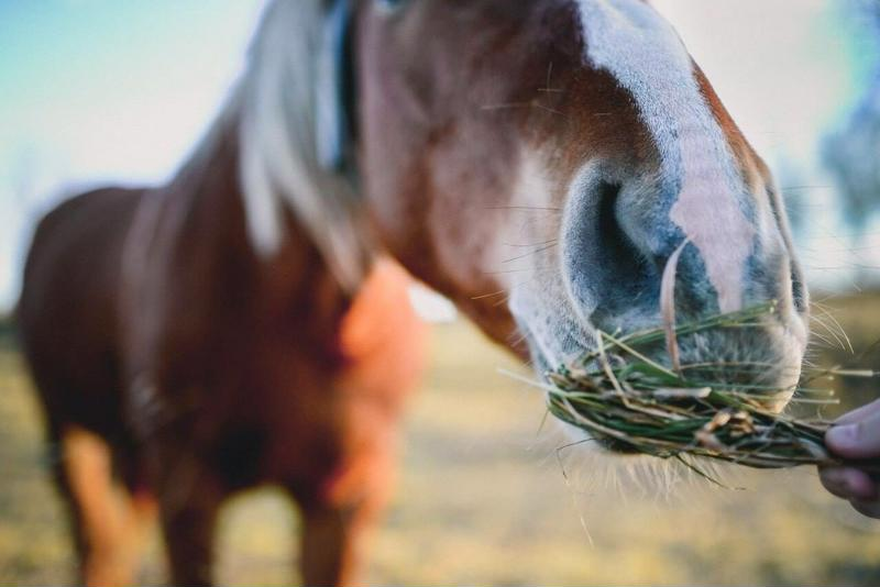Buying a horse means you'll also have to invest in food, supplements and medical care.