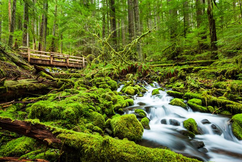 Moss and ferns like a high relative humidity. Servers and switches? Not so much.