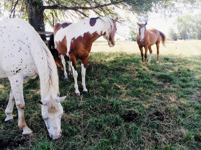 Horses can develop liver disease by eating toxic plants.