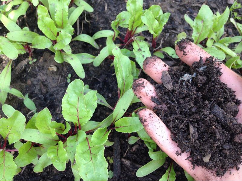 Make sure your soil has dried out before you start planting.