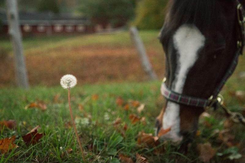 Horses need a consistent flow of forage in their stomachs.