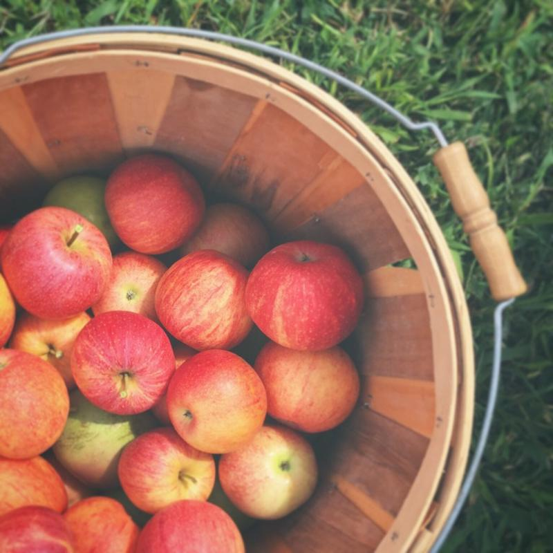 Go apple picking this October.