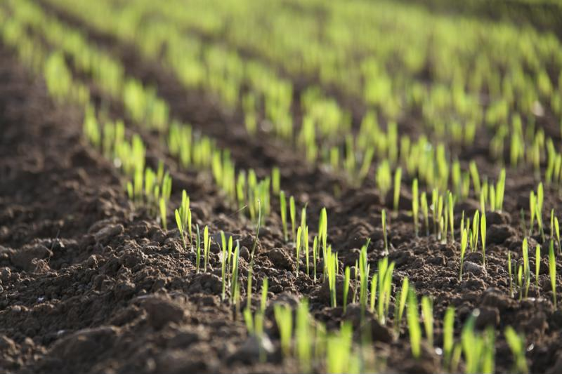 Today, there are millions of acres of GMO crops in America.