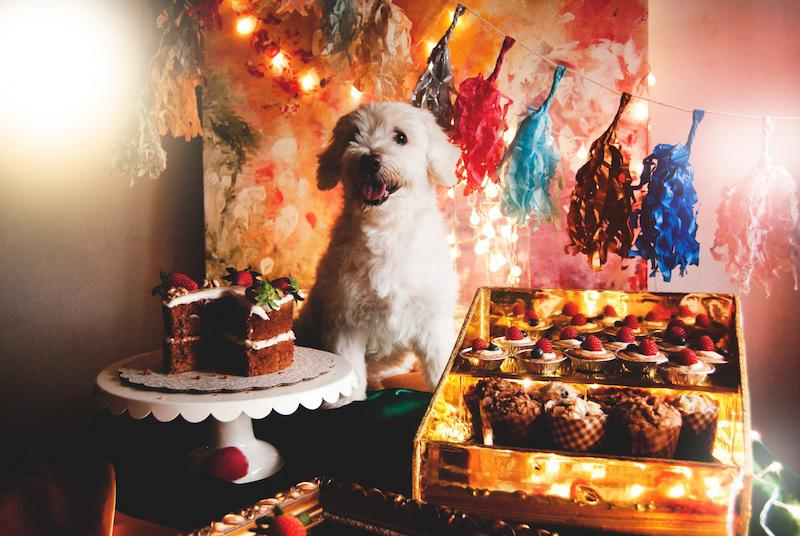 Dogs enjoy desserts just as much as people do.