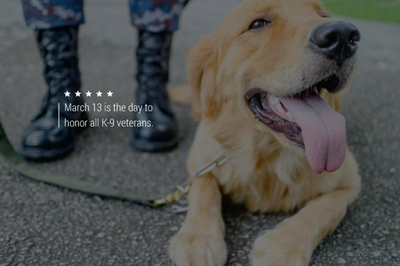 An image of a smiling dog at the feet of an anonymous servicemember.